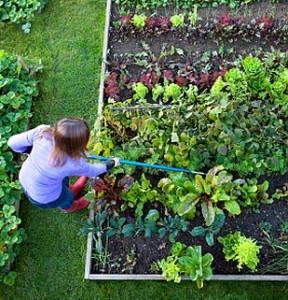 Organic Gardening Systems